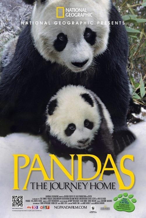 Zien In Het Omniversum Pandas The Journey Home KiDDoWz
